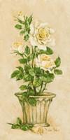 Shades of Rose I Fine Art Print