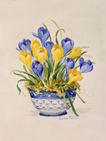 Blue and White Porcelain Crocus Fine Art Print