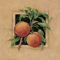 Peach Square Fine Art Print