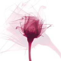 Rose Dance Fine Art Print
