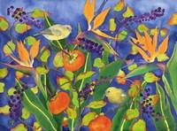 Amakihi Delight Fine Art Print
