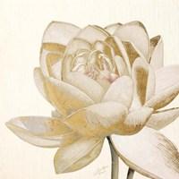 Vintage Lotus Cream II Fine Art Print