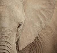 Elephant Up Close Fine Art Print