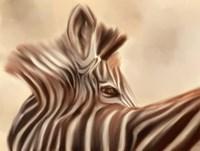 Zebra Looking Over Shoulder Fine Art Print