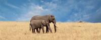 Elephant and her Calf Fine Art Print