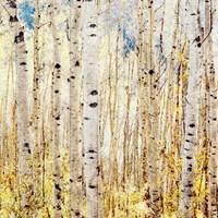 Birch Grove Fine Art Print