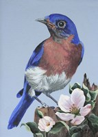 Bluebird Watch Fine Art Print