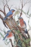 Bluebirds at Rest Fine Art Print