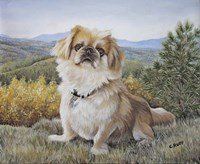 Bo at the Mountains Fine Art Print