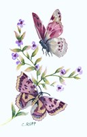 Butterfly in Lilac Fine Art Print