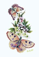 Butterfly in Pink Fine Art Print