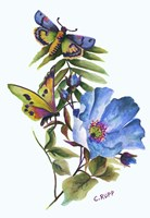 Butterfly on Blue Poppy Fine Art Print