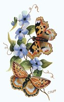 Butterfly on Blue Fine Art Print