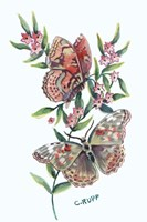 Butterfly with Starflower Fine Art Print