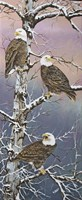 Eagle Trio at Dawn Fine Art Print