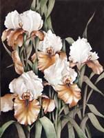 Mother's Garden Fine Art Print