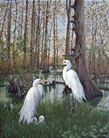 Snowy White Egret Nesting Fine Art Print