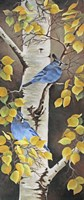 Stellar Jay with Leaves of Gold Fine Art Print
