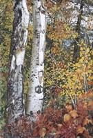Aspen Duo Fine Art Print