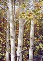 Aspen Quartet Fine Art Print