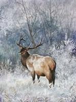 Frosty Morining Fine Art Print