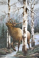 Majestic Elk Fine Art Print