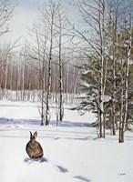 Winter Rabbit Fine Art Print
