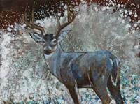 Deer I Fine Art Print