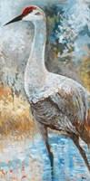 Sandhill Cranes I Fine Art Print