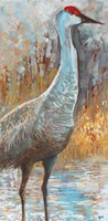 Sandhill Cranes III Framed Print