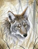 A Wild Gaze Fine Art Print