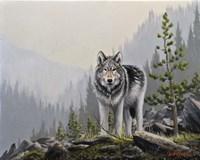 A Wild Domain Fine Art Print