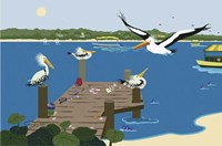 Where The Pelicans Gather Fine Art Print