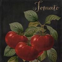 Medley Tomato Fine Art Print