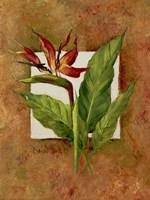 Tropical Squares 4 Fine Art Print