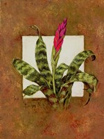 Tropical Squares 1 Fine Art Print