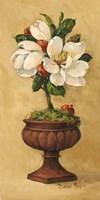 Magnolia Topiary I Fine Art Print