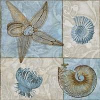 Sea Life V Fine Art Print