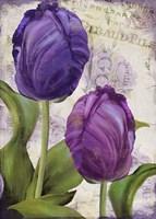 Parrot Tulips I Fine Art Print