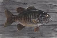 Clear Water Beauty Fine Art Print