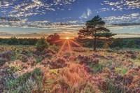Heathland Sunset Fine Art Print