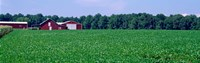 Green Field with Barn, Maryland Fine Art Print