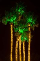 Illuminated Palm Trees at Dana Point Harbor, California Fine Art Print