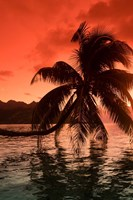Palm Trees at Sunset, Moorea, Tahiti, French Polynesia Fine Art Print