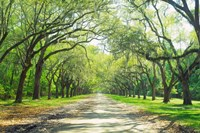 Live Oaks and Spanish Moss Wormsloe State Historic Site Savannah GA Fine Art Print