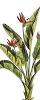Tropical Palm Paradise I Fine Art Print