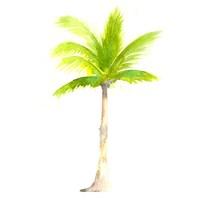 Tropical Icons Palm Tree Fine Art Print