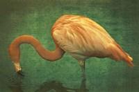 Caribbean Flamingo Fine Art Print
