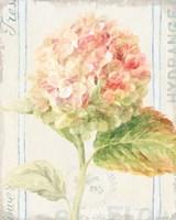 Floursack Florals VI Framed Print