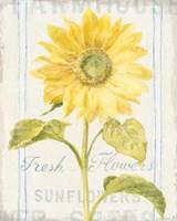 Floursack Florals II Framed Print
